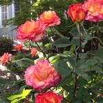 Love, from my garden!!