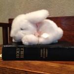 Bible & Bunny