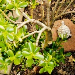 Jade Plant and Wiki (turtle)
